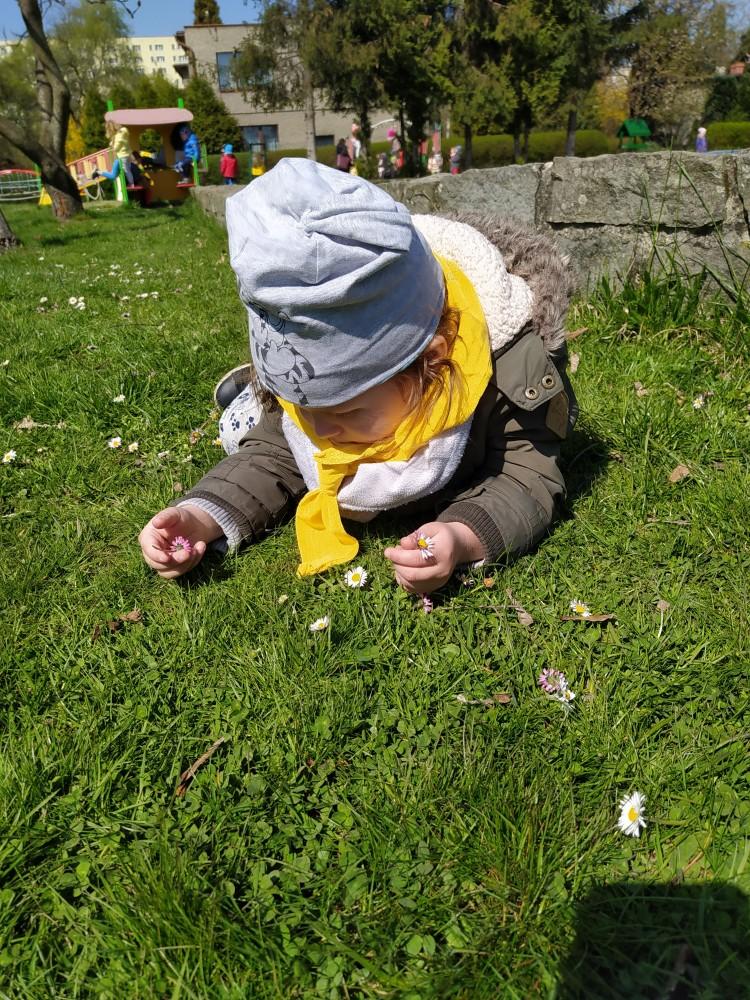 Zdjęcie przedstawia chłopca zrywającego stokrotki.